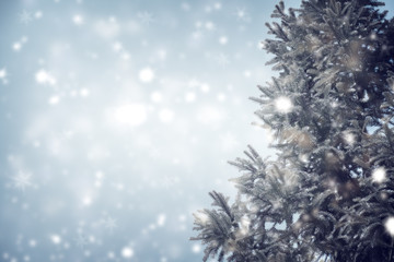 Christmas tree pine or fir with snowfall on sky background in winter. vintage color tone and rustic style.