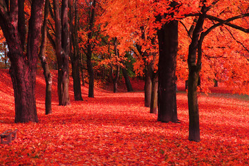 Wall Murals Coral red autumn park