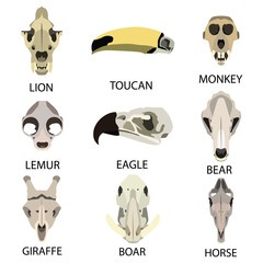animal skull flat icon set