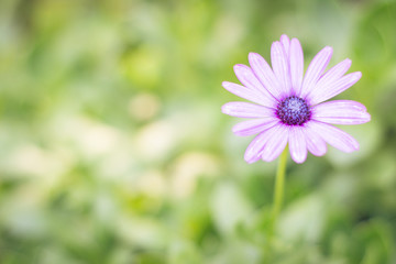 Pretty purple daisy on a green background with dark center