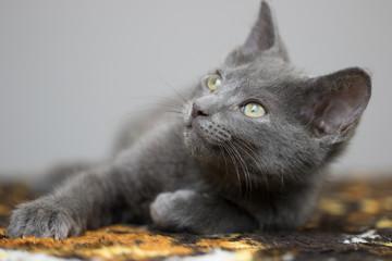 Kitten Gaze