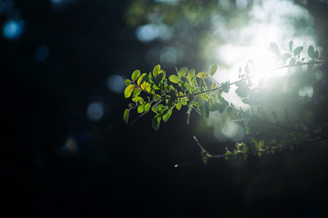 Tree leaves in the rays of the sun
