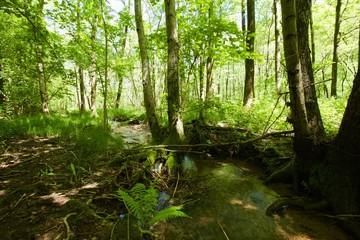 zona paludosa, ecosistema naturale