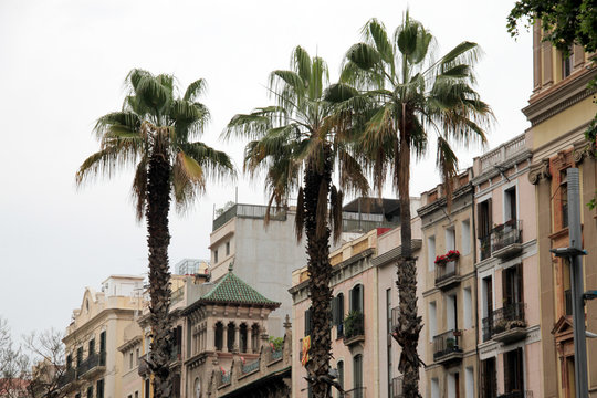 Palm trees in a street in Barcelona