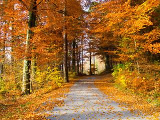Fall color, Jura Mountains, Switzerland