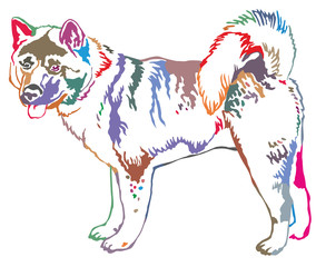 Colorful decorative standing portrait of american akita vector illustration