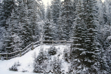 Winter landscape of forest with rustic fence
