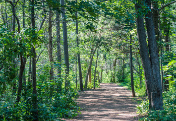 rustic trail through lush green forest in Massachusetts