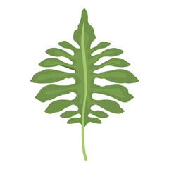big green leaves of tropical monstera plant isolated on white background vector illustration