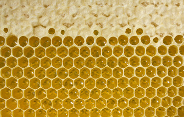 Nectar and honey in new comb