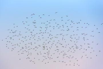 A flock of birds against the sky
