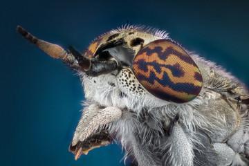 Horsefly macro photography