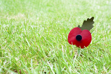 Remembrance Day Poppy in Grass