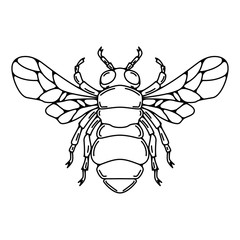 Bee illustration in line style isolated on white background.