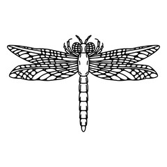 Dragonfly illustration isolated on white background.
