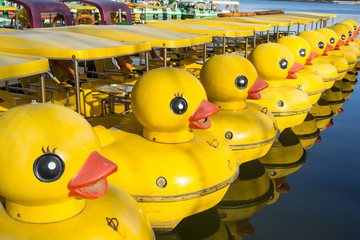 Row Of Yellow Duck Boats In Lake