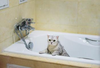 A cat in bathtub