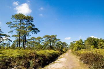 Phu Kradueng National Park. forest