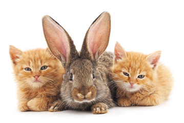 Red kittens and bunny.