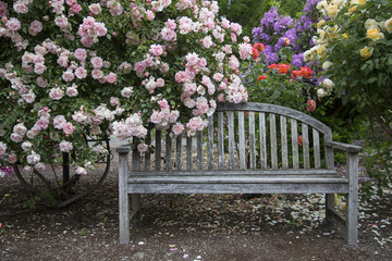 Weathered Wooden Bench Draped in Blooming Pink Rose Bush Branches, Yellow, Orange, and Purple Flowers in Background