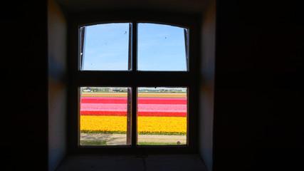Aussihct aus dunkle Zimmer auf helle Blumenfeld.
