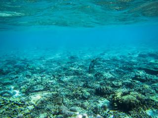 Die Unterwasserwelt eines indonesischen Korallenriffs