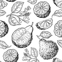 Bergamot vector seamless pattern drawing. Isolated vintage background of citrus fruit with flower and slice.