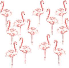 Color sketch of pink flamingos