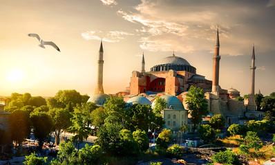 Bird and Hagia Sophia