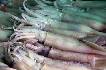 Pile of squid on ice, squid have a mantle and tentacles or arms. It have eight arms arranged in pairs.