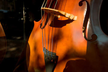 Cello Violin Body