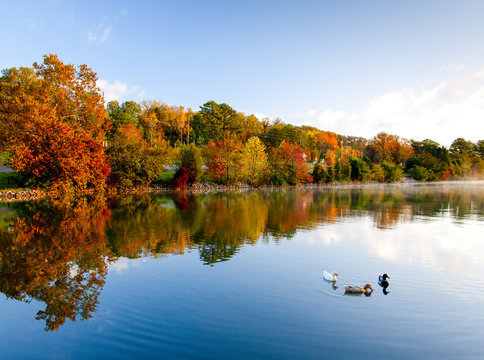 ducks in river in fall colors with reflection