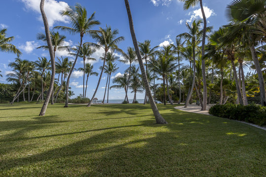 Private Garden in Marathon, Keys Florida USA