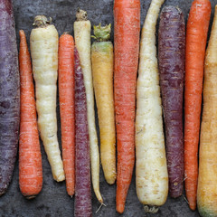 Multi-Colored Carrots
