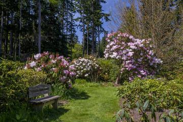 Rhododendrons blooming in garden