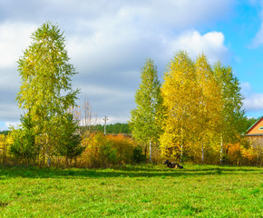 Bright foliage on trees growing in the countryside in bright sunny weather in autumn