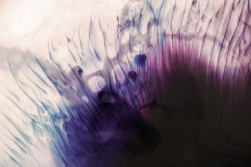 Abstract background of thread like colorful splotch similar to close-up of bright fish flipper. Watercolor gradient from dark to light blue and purple shading-off