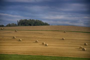 Fotoväggar - Landschaft im Sommer, abgeerntetes Kornfeld