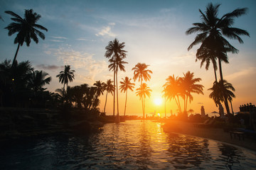 Silhouettes of palm trees on a tropical beach during sunset.