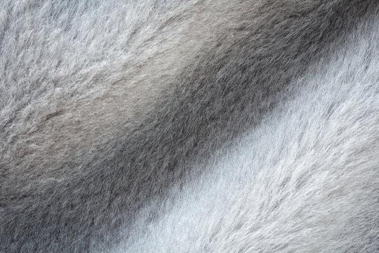 Short gray fur