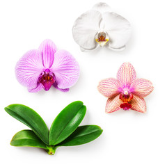 Orchid flowers and leaves set