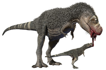 3D rendering of a feathered Tyrannosaurus Rex feeding a juvenile, isolated on a white background.