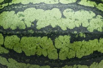 watermelon skin texture background