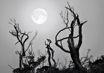 Bare trees with full moon background in a scary and spooky scene as Halloween theme