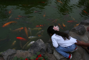A child observes fishes in a lagoon at El Olivar park in San Isidro district of Lima