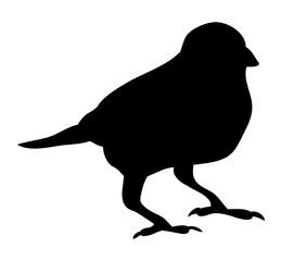 black silhouette bird
