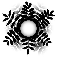 Vector frame of bouquet leaves on white background. Rowan and acacia silhouette leaf
