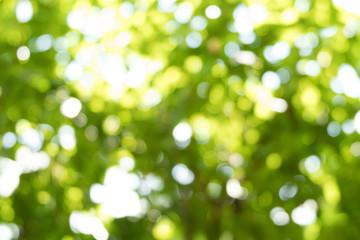 Nature bokeh background.
