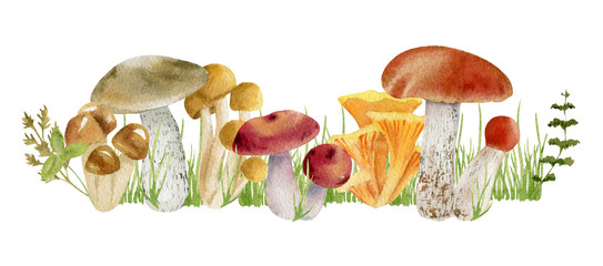 watercolor clipart of mushrooms