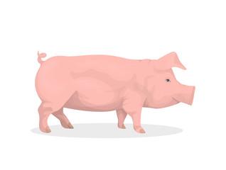 Isolated pig illustration.